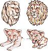 Köpfe von Löwen und Löwenbabys