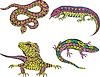 Estilizada serpiente multicolor y lagartos | Ilustración vectorial