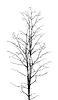 Blattlosen Baum