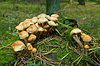 Mushrooms at forest | Stock Foto