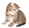 Flauschige Kätzchen. Imitation of Aquarellmalerei