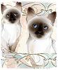 Porträt eines Paares Thai Katzen. Traditionelle siamesische