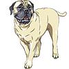 Vektor Cliparts: Skizze Porträt Haushunde Rasse Bullmastiff