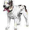 Skizze Hund Central Asian Shepherd Dog Breed