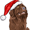 Hund Deutscher Schäferhund in Weihnachten Hut von Santa Claus