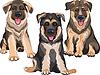 Set lächelnd Welpen Hund Deutscher Schäferhund