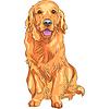 Skizze roten Jagdhund Rasse Golden Retriever