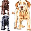 Set Welpen Hunderasse Labrador Retriever