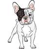 Skizzieren Haushund Französisch Bulldog Breed | Stock Vektrografik