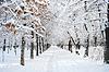 冬季公园景观 | 免版税照片