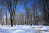 Landschaftspark im Winter | Stock Foto