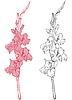 Gladiolo | Ilustración vectorial