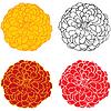 Fondo con las flores del zinnia | Ilustración vectorial