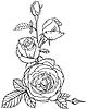 Flores y capullos de rosas | Ilustración vectorial