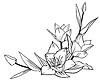 Flores tulipanes | Ilustración vectorial