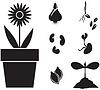 Blumen und Samen