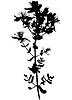 Hypericum St. John`s Würze Blume