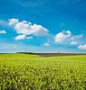 Rolnych pole zielone | Stock Foto