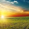 Piękny zachód słońca nad zielonym polu | Stock Foto