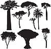 African Baumschattenbildern