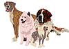 Gruppe von Hunden verschiedener Rassen