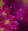 ID 3443708 | Nahtloser Hintergrund mit Rosen | Foto mit hoher Auflösung | CLIPARTO