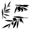 橄榄树枝 | 向量插图