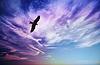 ID 3564506 | Raubvogel fliegi im blauen bewölktem Himmel | Foto mit hoher Auflösung | CLIPARTO