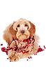 红色的装饰和红色的珠子装饰米色的狗 | 免版税照片