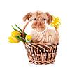 ID 3679988 | Hündchen im Korb mit Blumen | Foto mit hoher Auflösung | CLIPARTO