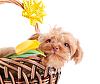 ID 3679989 | Doggie Porträt in Korb mit Blumen | Foto mit hoher Auflösung | CLIPARTO