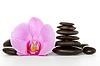 Orchidea i czarne kamienie | Stock Foto