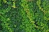 Hojas verdes de la pared de fondo | Foto de stock