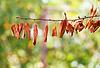 Jesienią żółte liście na gałęzi drzewa | Stock Foto