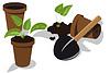 Umpflanzen Blume Sämlinge