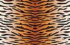 Hintergrund Tigerfell