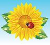 向日葵和瓢虫 | 向量插图