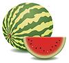 vektor watermelon