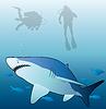 Hai, Fische und Taucher