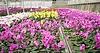 큰 난초 온실 | Stock Foto