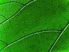 녹색 잎 | Stock Foto