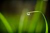 新鲜的草与露珠 | 免版税照片