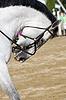ID 3434081 | Pferd | Foto mit hoher Auflösung | CLIPARTO