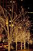 Weihnachten. Beleuchtete Bäume | Stock Foto