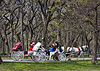 Central Park, New York | Stock Foto