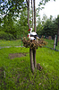 ID 3447318 | Bociany na drzewie | Foto stockowe wysokiej rozdzielczości | KLIPARTO