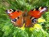 ID 3463768 | Motley Pfau Auge | Foto mit hoher Auflösung | CLIPARTO