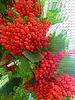 Abstrakter Cluster von roten reifen Schneeball-rose | Stock Foto