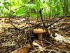 Pilz im Wald | Stock Foto