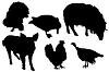 Czarne sylwetki zwierząt domowych i ptaków | Stock Foto